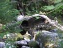 цветущие камни, окаменевшие деревья... Приморье!