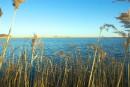 Озеро в камышах