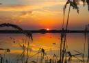 Озеро в камышах. Раннее утро. Восход