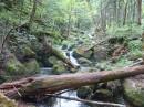 Дорога к водопадам. Еламовские водопады. Лазовский район.