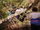 Непроходимые джунгли Приморья. Река Милоградовка. Лазовский район.