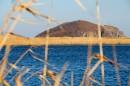 Озеро среди камышей, протоки. Полуостров Островок Фальшивый.