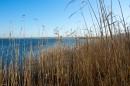 Озеро среди камышей