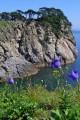 На острове Спасения (бухта Спасения, Дальневосточный государственный морской заповедник)