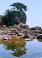 Отражение (могильные сосны на острове Спасения), бухта Спасения, ДВГМЗ