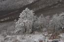 Ледовые деревья