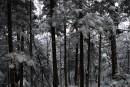 В лесу то холодно