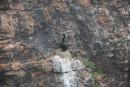 Бакланы на гнездах