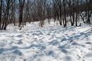 Замёрзшее болото, испещерённое заячьими(?) следами.