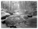 Таинственный лес (подножие Пидана)