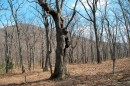 Говорящее дерево.