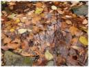 Отражение Осени (район Пидана)