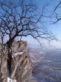 Дерево в скале. Пещеры хребта Чандолаз. Партизанский район.