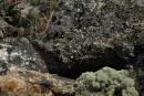 Мок на камнях