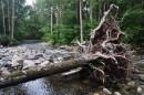 Заваленное дерево.
