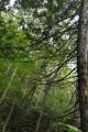 Ветви,свисающие над рекой.