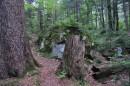 Древние пни и камни, проросшие мхом и папоротником.