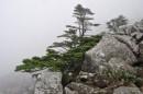Среди камней островками растут ели.