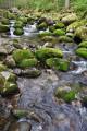 Зелёные камни.
