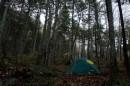 В тиши лесной...
