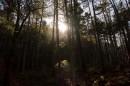 Восход в лесу.