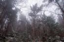 Потерялись и попали в какой-то лес.