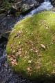 Валуны усыпаны хвоей и листьями.