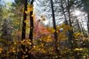 """""""Осень, осень, ну давай у листьев спросим..."""""""