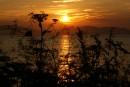 Закат сквозь заросли травы.