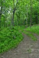 Дорога в лес.
