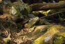 Замшелые камни