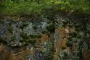 Скальные растения