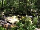 Вдоль реки