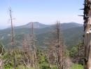Вид сквозь сгоревший лес