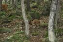 Поросята с оленями