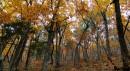Кедрово-дубовый лес.