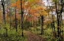 Лесной тропой в Грибановку.
