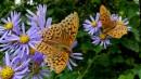 Пообносился бабочкин наряд.