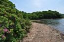 Весь берег покрыт кустами шиповника.