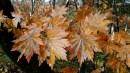 Осенние краски.