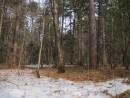 снег на опушках отступает