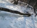 почему снег тает ПОД упавшим деревом?