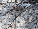снег уже весенний, ноздреватый