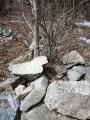 камни и деревья