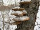 В лесу близ Славянки