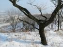 На горе Янковского