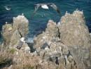Скалы и Чайки. Остров карамзина