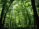 зеленая симфония