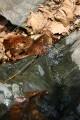 несмачиваемые листья