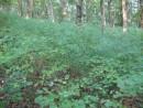 маскировочная сетка, натуральная